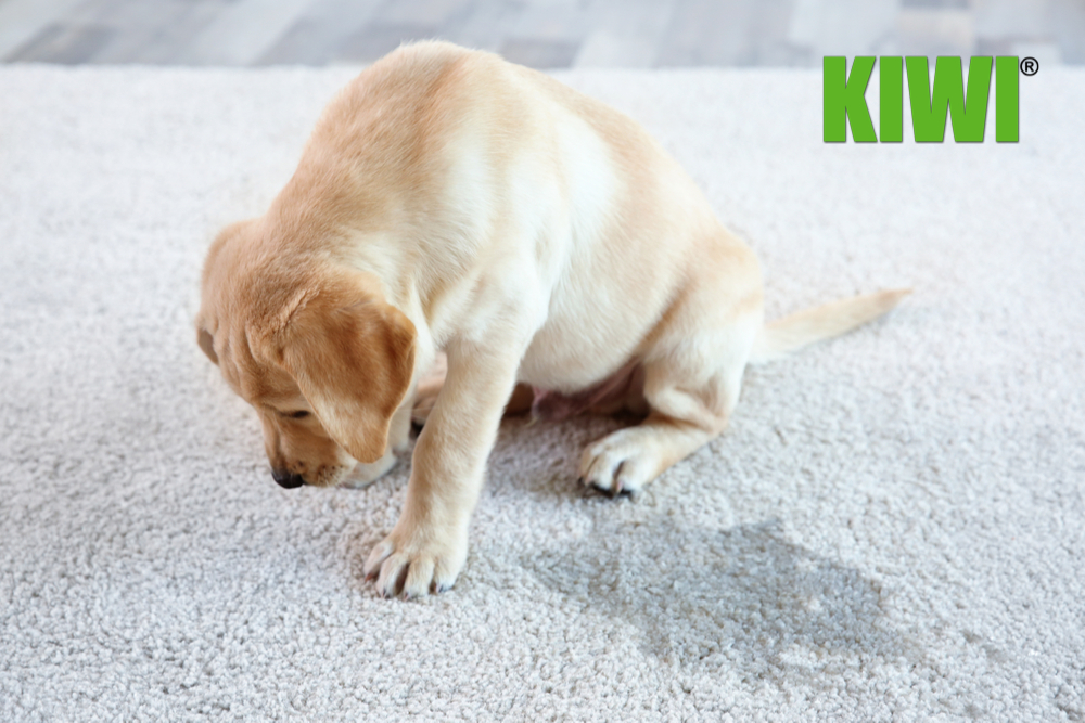 How to Fix a Hole in the Carpet from a Dog