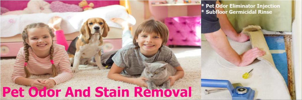 removing pet stains and odors